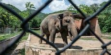 Das ist der einsamste Elefant der Welt