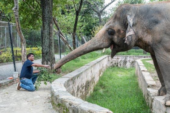 Tierschützern war es gelungen, die Schließung des Zoos zu erwirken, nachdem sie die zweifelhaften Haltungsbedingungen jahrelang angeklagt hatten.