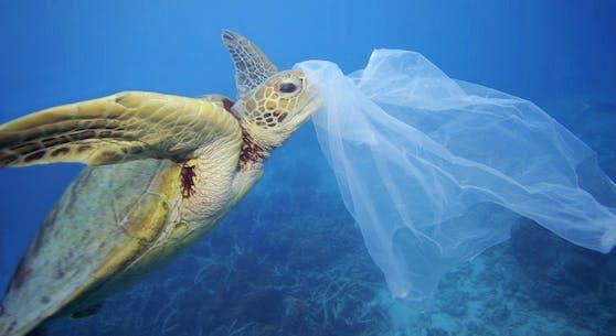 Meerestiere leiden unter der Plastik-Plage.