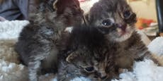 Babykatzen-Alarm: Tierrettung hat 25 Flaschenkinder
