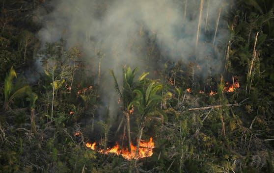 Der Regenwald auf der Erde schwindet.
