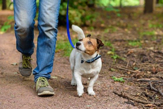 In Salzburg-Liefering ereignete sich am Montag, dem 21.09.2020, ein Hundediebstahl.