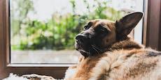 Strafanzeige gegen Hundehalter - sechs Tiere abgenommen