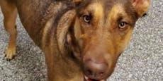 Ausgesetzter Hund mit erschütternder Nachricht gefunden