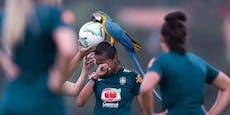 Papagei macht es sich am Kopf von Fußballerin gemütlich
