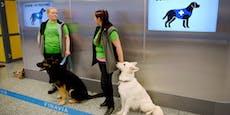 Corona-Spürhunde im Kampf gegen das Virus
