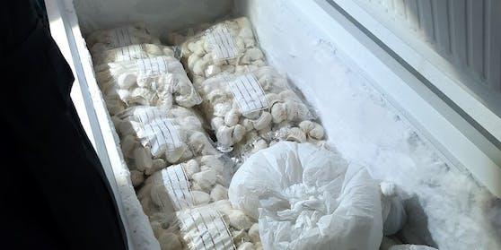Kühltruhe mit Unmengen an Teigtascherln
