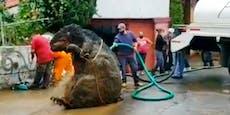 Ekel-Fund in Abwasserkanal: Ist das eine Riesenratte?