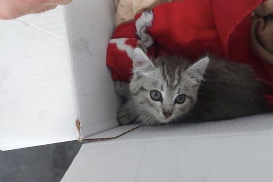 Ein lebensmüdes Kätzchen fuhr hunderte von Kilometern im Radkasten eines Autos mit.