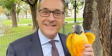 Strache blamiert sich mit Papagei im ATV-Duell