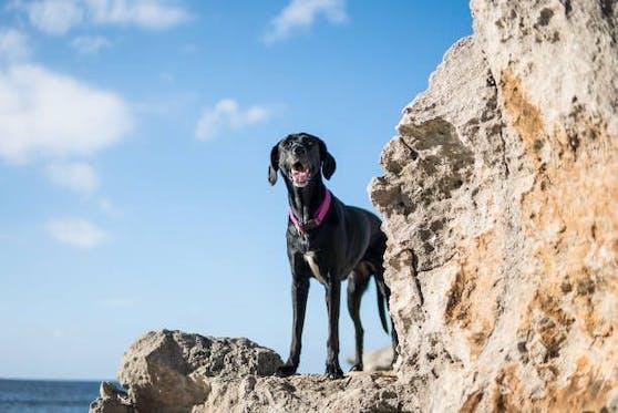 """Wie durch ein Wunder hat Hündin """"Stella""""  es geschafft 3 Monate in einer Höhle zu überleben."""