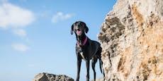 Vermisster Hund überlebt 3 Monate lang in Meereshöhle