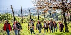 FPÖ ruft trotz Corona-Absage zum Weinwandern auf