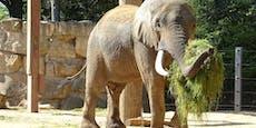 Wiener Elefanten sollen Deutschen liebesfit machen