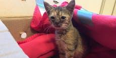 Herzlos! Katzenbaby in Karton vor Tierheim ausgesetzt