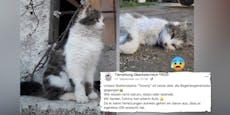 """Vergiftet! Tierrettung trauert um Hofkater """"Tommy"""""""