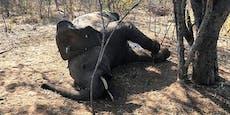 Mysteriöses Elefantensterben in Simbabwe