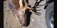 Jäger schießt auf Hirsch, doch der nimmt tödliche Rache
