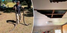 Pythons krachen bei Paarungskampf durch Zimmerdecke