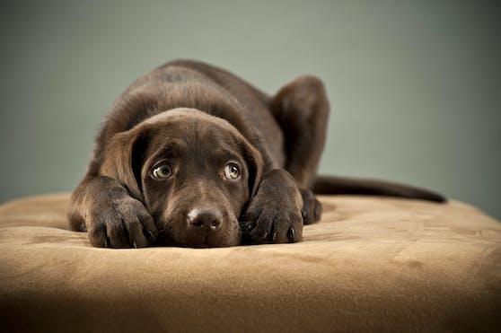 Für einen Hund bedeutet eine Trennung häufig nicht nur eine teilweise oder komplette Umstellung des bisherigen Lebens, sondern auch Abschied einer Bezugsperson und Stress, der durch die Streitigkeiten noch intensiviert wird.