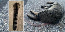 Schon zweite gehäutete Katze in nur acht Tagen