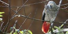 Papageien werden verlegt, weil sie Zoo-Gäste schimpfen