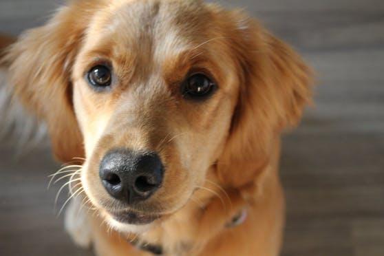 Aufs Neue bestätigt sich: Hunde sind die besten Freunde des Menschen.