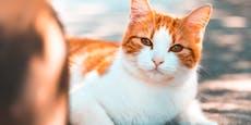 Können Katzen eifersüchtig sein?