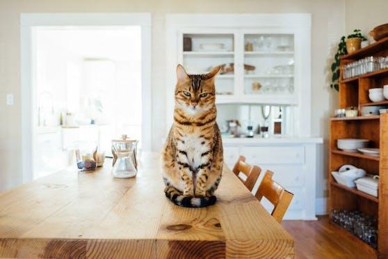 Manche Katzen schmollen vor sich hin, andere sind offensiver im Zurschaustellen ihres Unmutes.