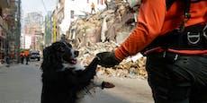 Beirut: Hund erschnüffelt Mensch unter Trümmern