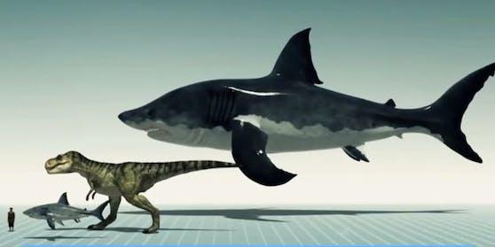 Der Otodus megalodon (ganz oben) hat vor bis zu 23 Millionen Jahren gelebt.