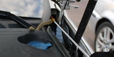 Blinder Passagier: Schlange zischt im Motorraum