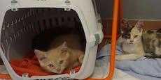 62 Katzen aus Wiener Wohnung befreit
