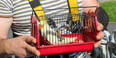Feuerwehr muss Vogel aus Baum retten