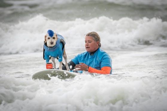Der gerettete Rettungshund Scotter ist ein Star am Surfbrett.