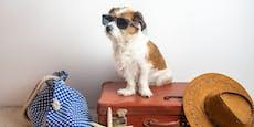 So reise ich mit meinem Hund richtig