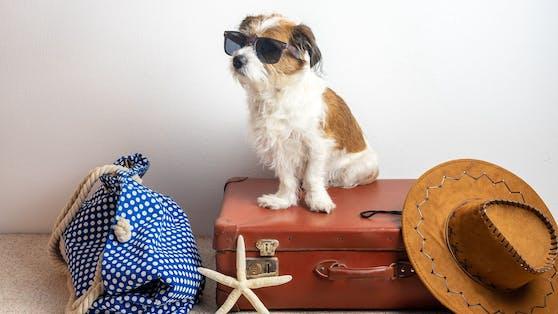 Wer auf das vierbeinige Familienmitglied im Urlaub nicht verzichten will - hier ein paar Tipps.