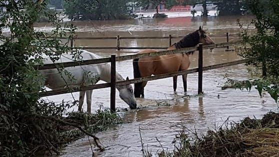 In Erftstadt-Bliesheim wurden insgesamt 10 Pferde bereits gerettet. Bei fünf weiteren sucht man noch nach den Besitzern.