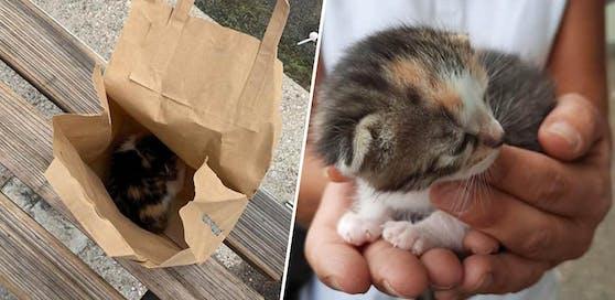 Das kleine Kätzchen wurde bei einer Bushaltestelle ausgesetzt.
