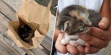Baby-Kätzchen in Sackerl bei Bus-Haltestelle ausgesetzt