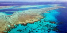 Unesco will Great Barrier Reef als gefährdet einstufen
