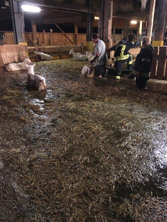 Die Florianis retteten die Ziegen aus dem überschwemmten Stall.