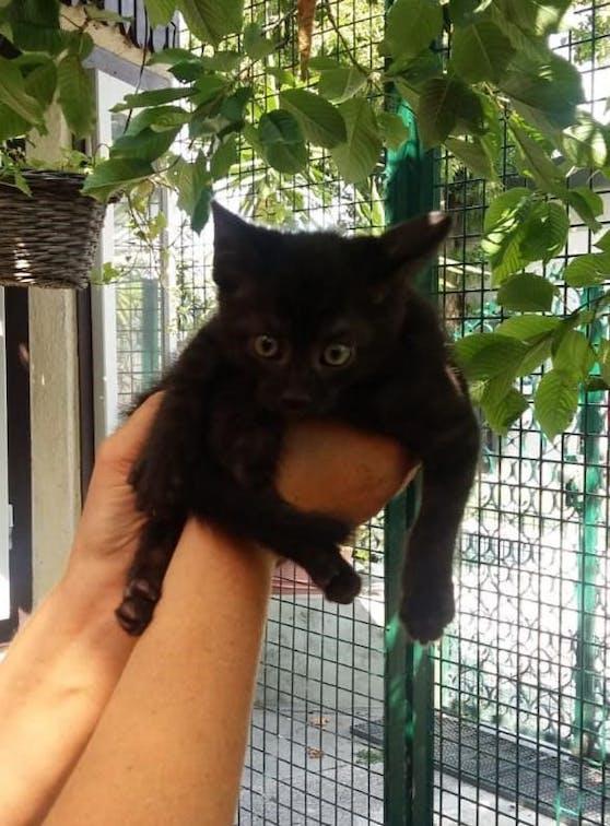 Diese kleine Katze wurde mehrmals in die Luft geworfen.