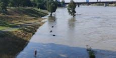 """""""Bitte auf keinen Fall in Neuer Donau schwimmen gehen"""""""