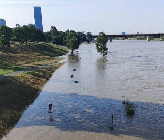 Die Neue Donau ist seit dem Hochwasser stark verschmutzt.