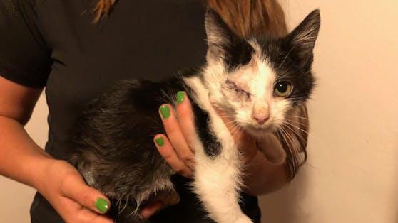 Das Kätzchen wurde in einem katastrophalen Zustand gefunden.