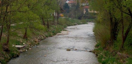 Am Ufer der Triesting in Berndorf passierte es.