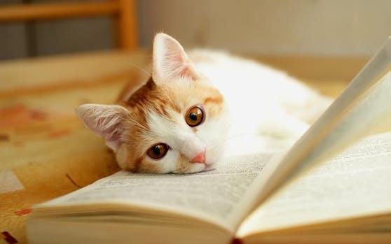 Ein Kätzchen liegt auf einem Buch. Symbolfoto.