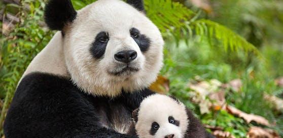 Pandas Ya Ya and Mei Mei