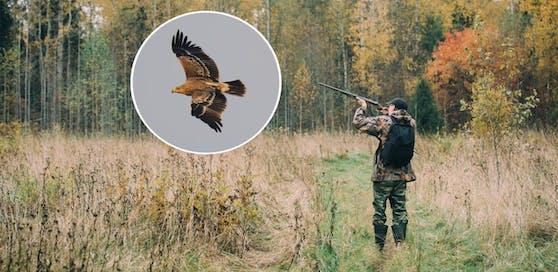 Der Jagdverband will offenbar mittelfristig auf Greifvögel schießen dürfen.